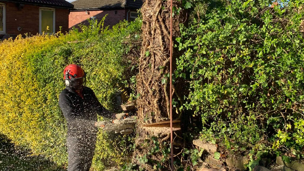 Felling and Pruning